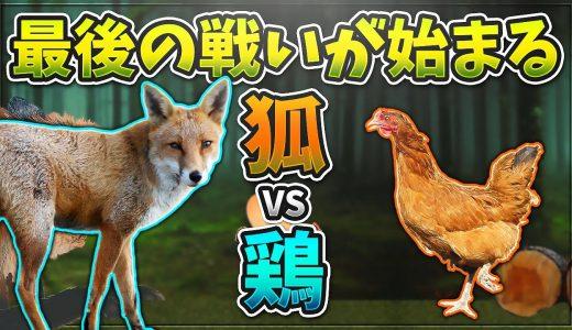 狐 vs 鶏 最後の戦いが始まるチキン卵 #完(Egg is broken.heart is too.)【KUN】【KUN】